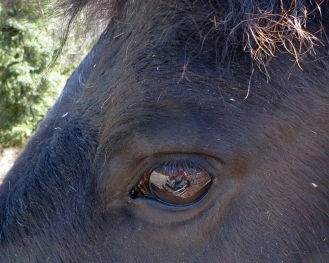 Horse's Eye and Reflection