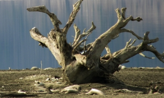 Driftwood Creature at Arrow Lake