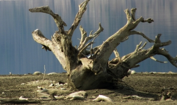Driftwood Creature at Arrow Lake
