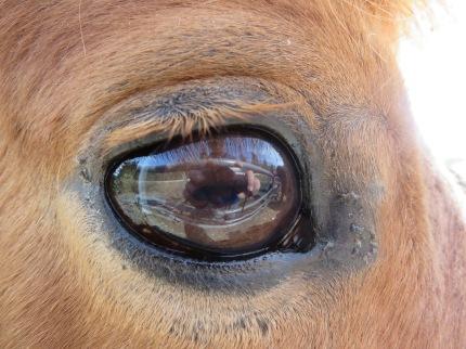 Peter's Portrait in Horse's Eye
