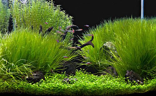 planted_tank1