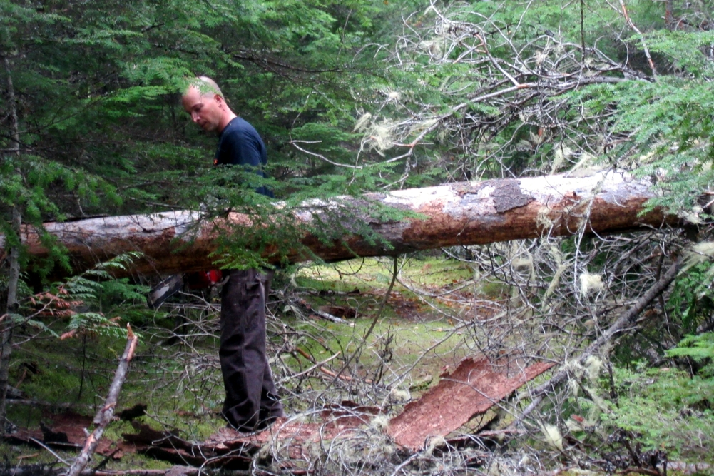 Since the fallen pine tree was blocking the road, Michael cut the middle section out of the tree.