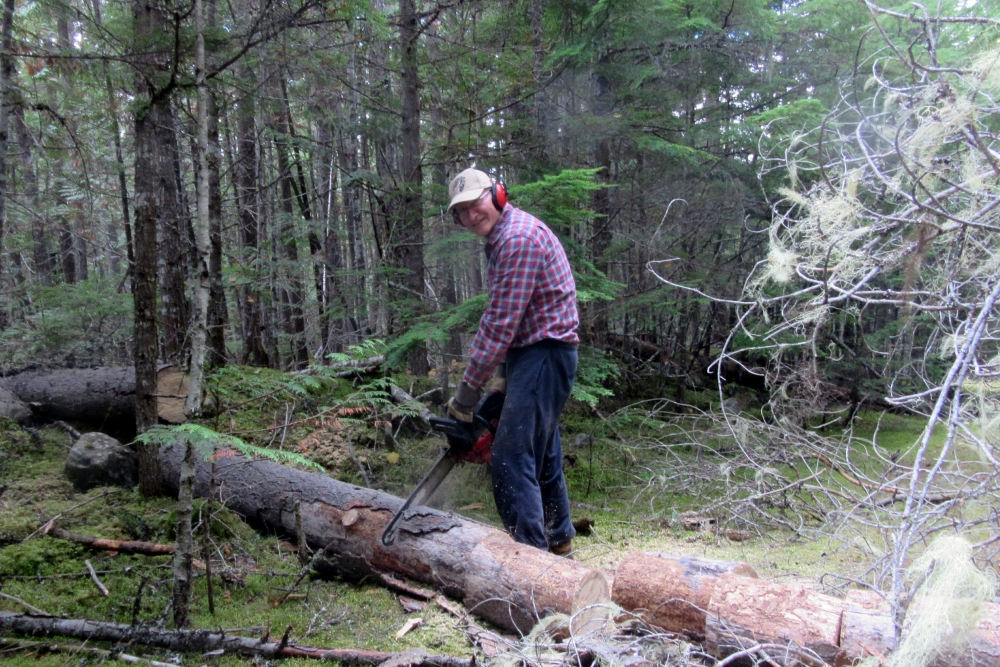 Then it was my turn to cut the large section into logs that Michael carried to the trailer.