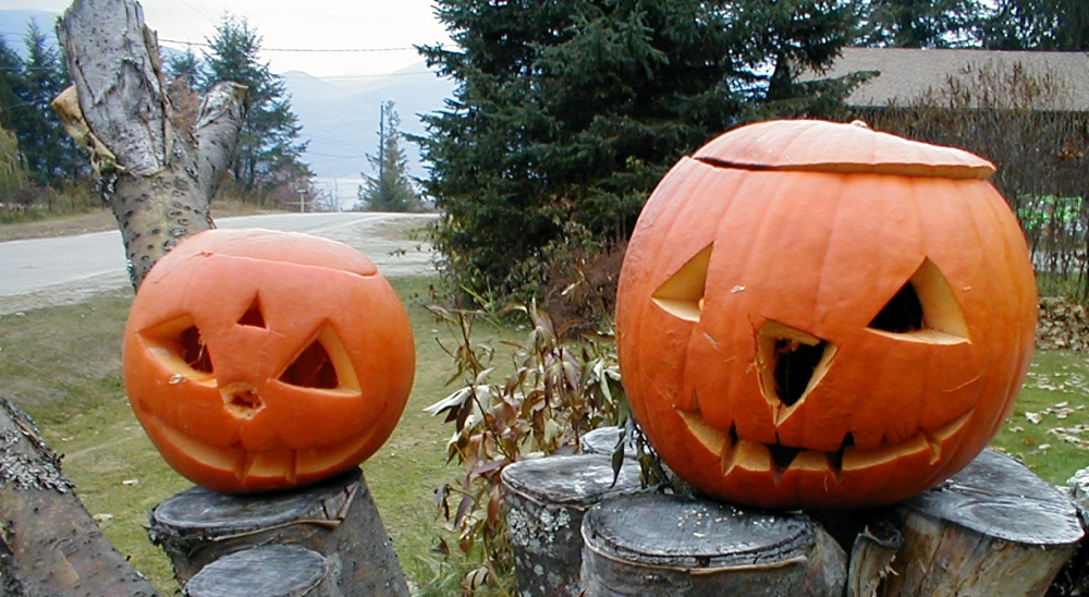 The bright orange pumpkins announce that Halloween is not very far.