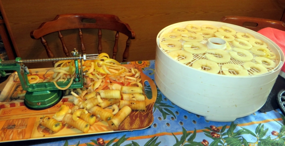 ... gently place the apple rings on the tray. All the four trays are now filled.