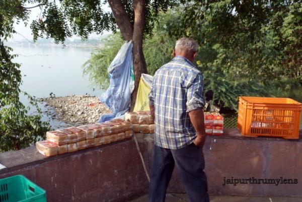 lake conservation at jal mahal