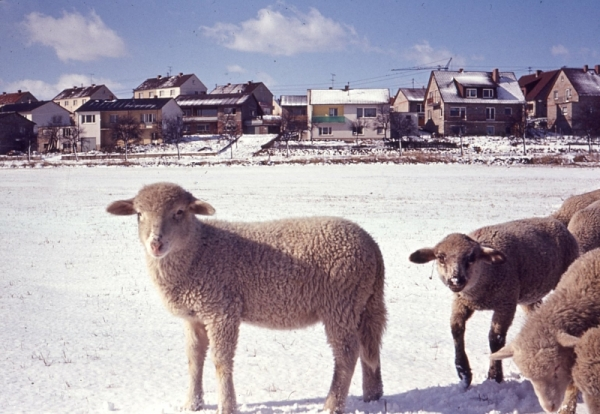 Pastoral Scene of Watzenorn-Steinberg (today's Pohlheim) near Giessen - January 1965