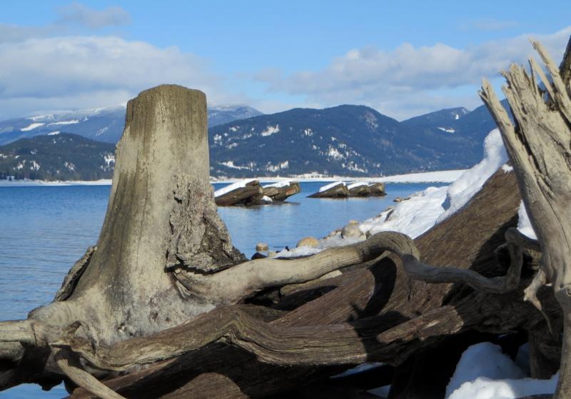 Shooting through Tree Stumps of a Bygone Era
