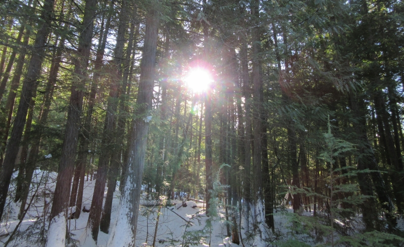 Catching Precious Sun Rays Peeking through the Forest - Gertrud Klopp