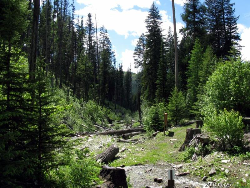 Lambert Creek WA seahorsecorral.org