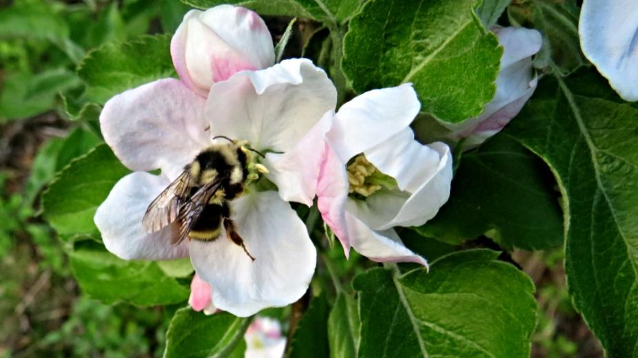 IMG_3349Bumble Bee